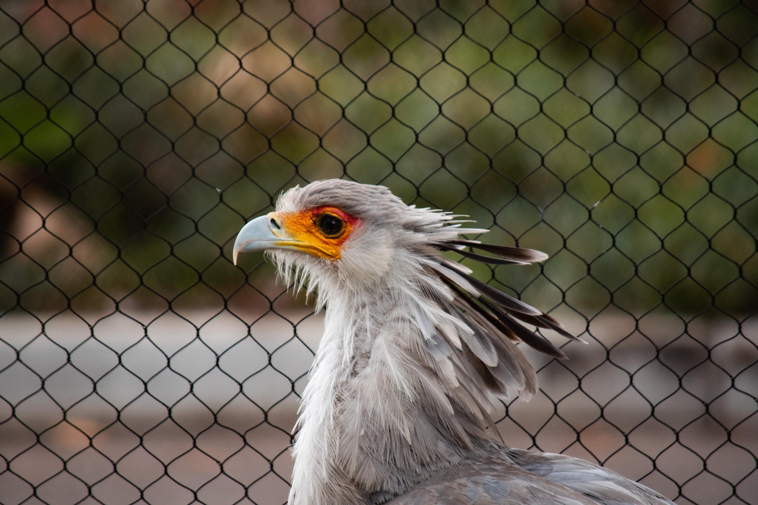 zoo 30.jpg