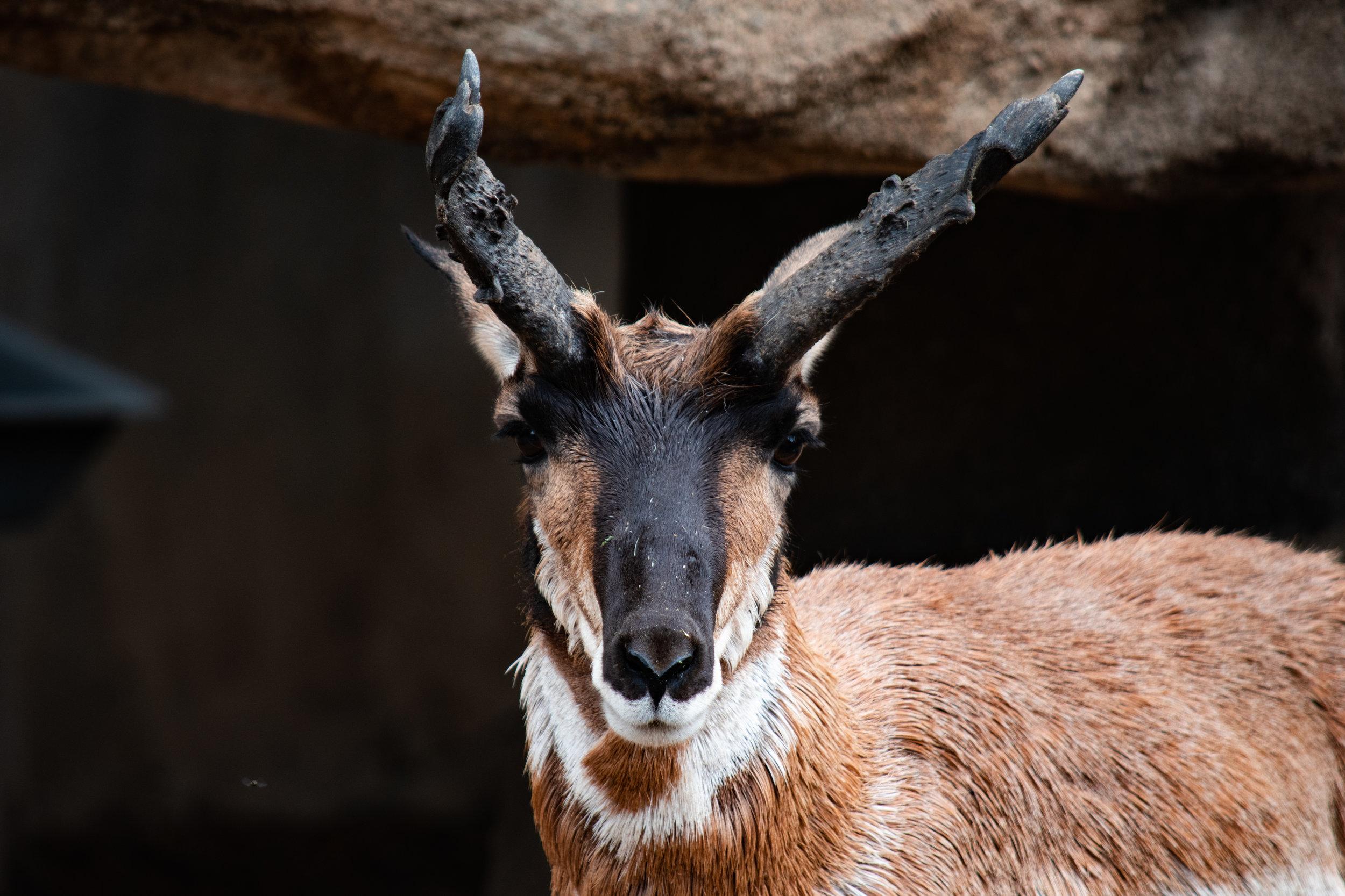 zoo 19 deerish.jpg
