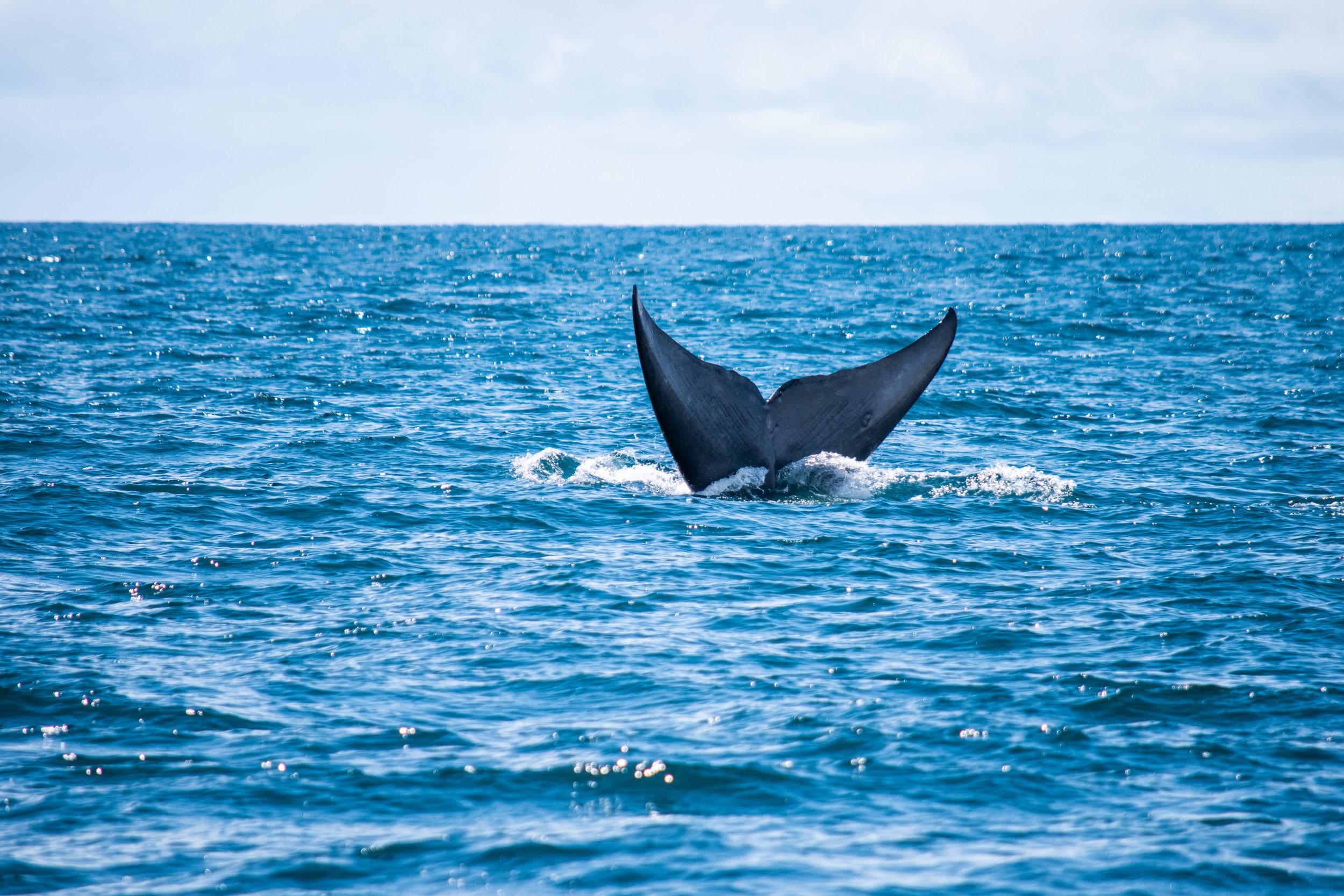 whale 9.jpg