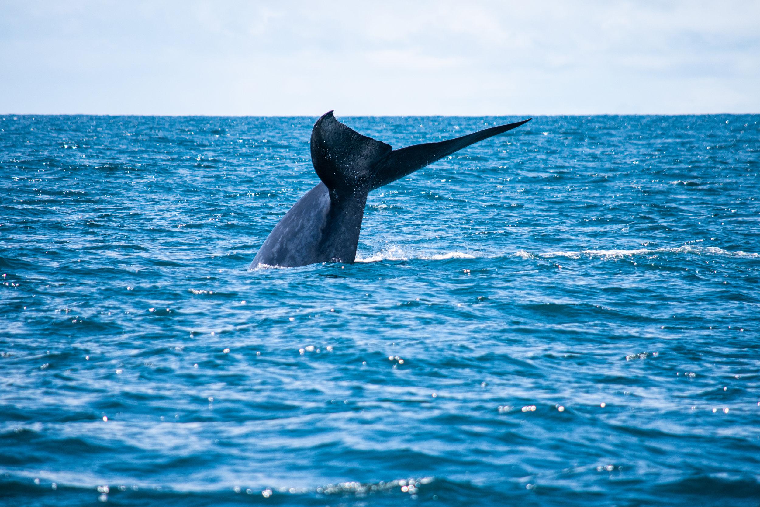 whale 8.jpg