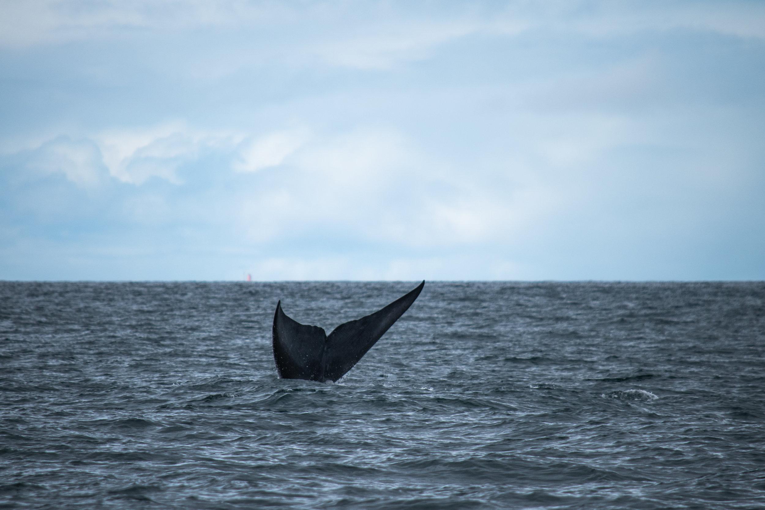 whale 4.jpg