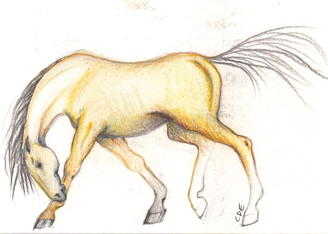 Yellow Horse Sketch ( 6.5 x5)