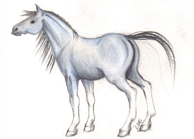 Blue Horse Sketch (8  .5 x5)