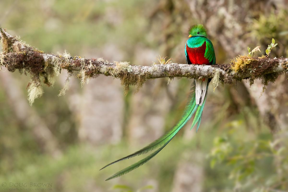 20140215-_A0R9714-Resplendent-Quetzal-crop.jpg