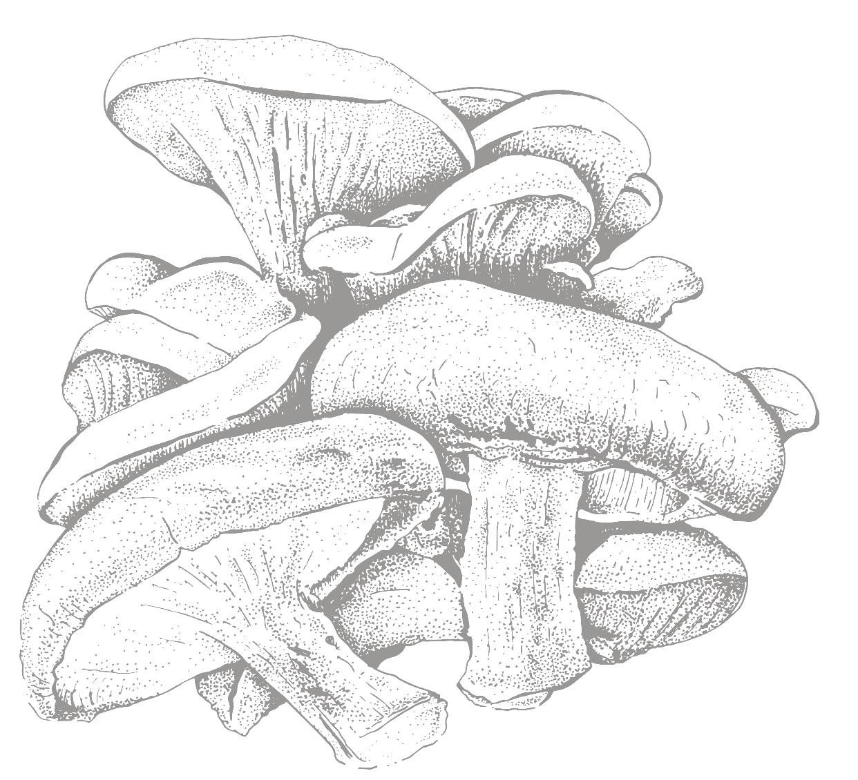 Mile+High+Fungi