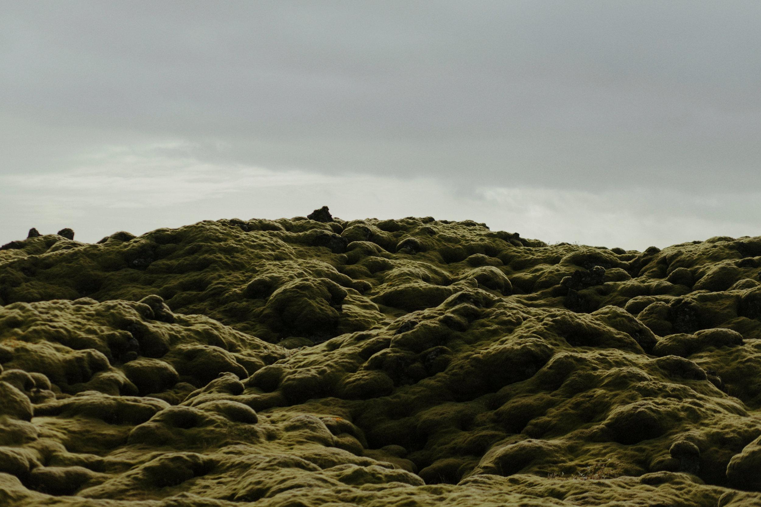 Iceland South Region-81Iceland South Region Grain.jpg