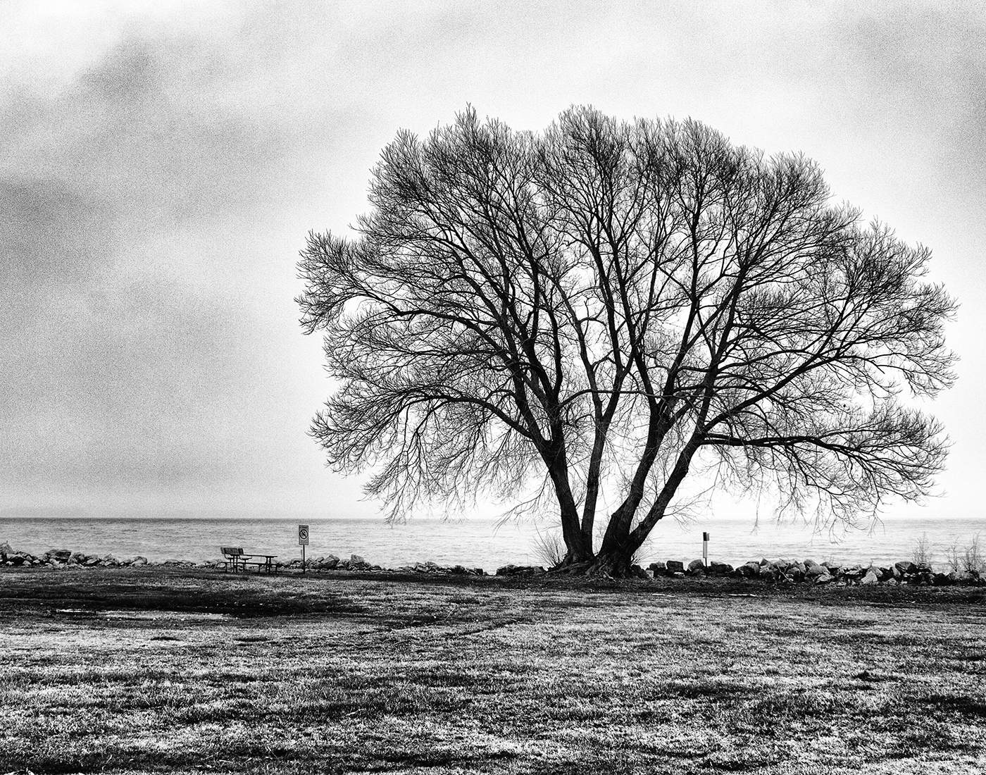 This is a tree I photographed in Michigan's Lake Erie Metro Parks in March 2012. When I took this photograph, I knew that I was going to make it into a B&W photograph.