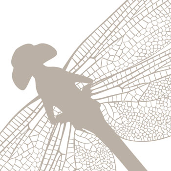 103. dragonfly.jpg