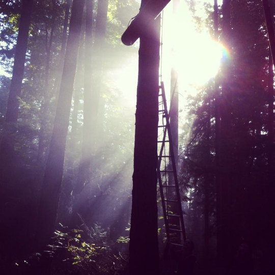 gorgeous ropes course setting