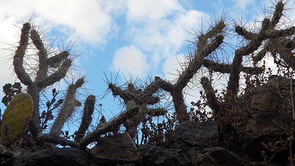 12-peru-pictures-cacti