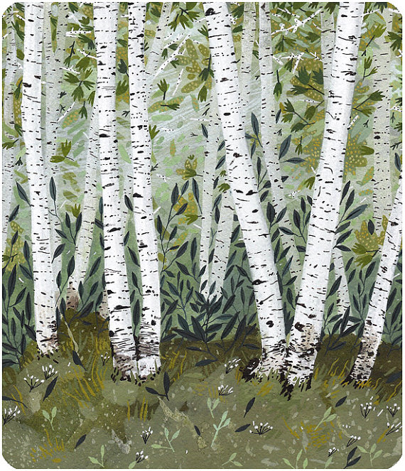 Birch Bark Illustration