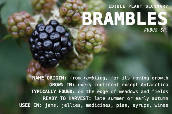 edible-plant-glossary-brambles