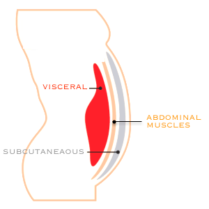 subcutaneous-versus-visceral-fat-.png