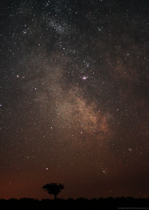 MilkyWay+tree_07072013.png