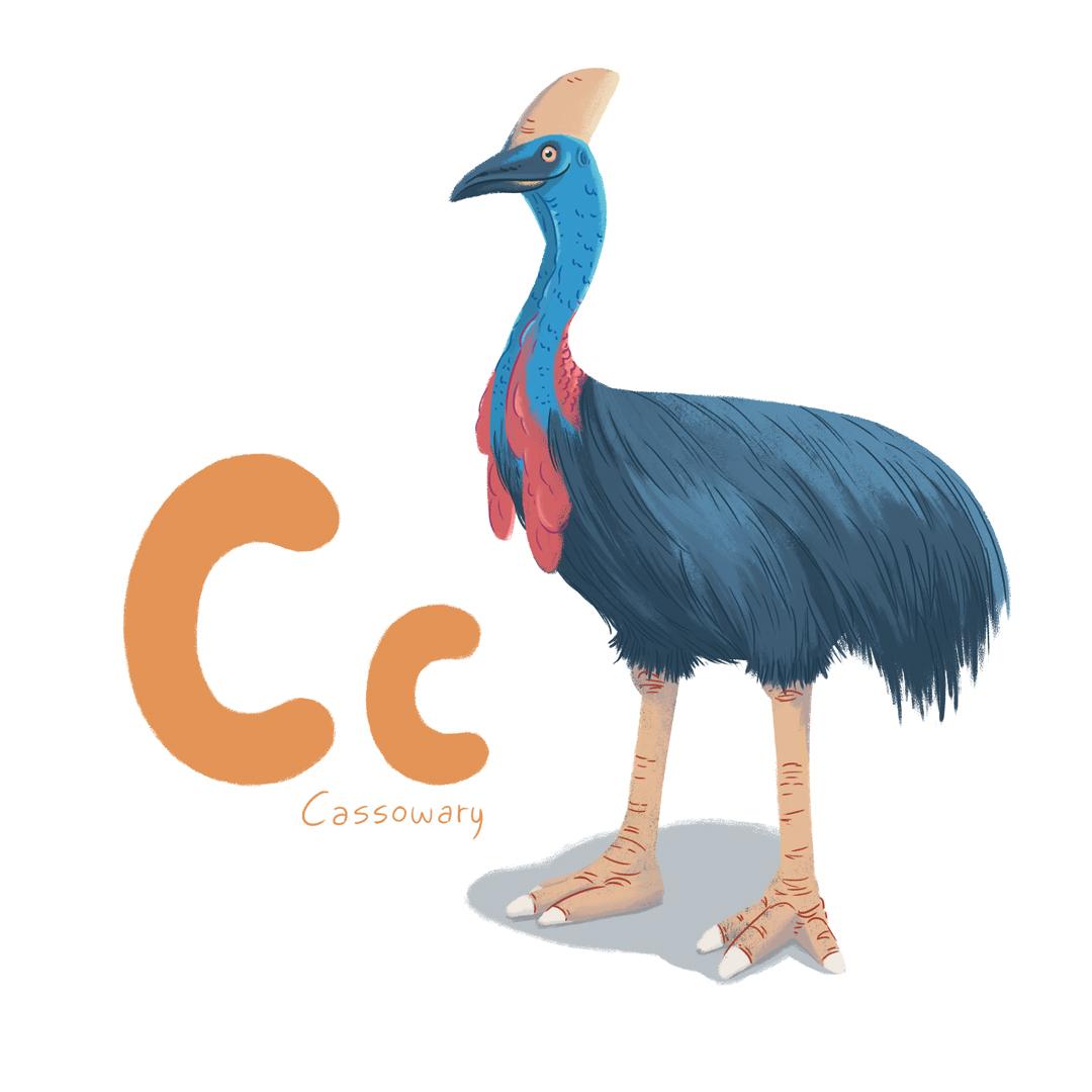 Cassowary.jpg