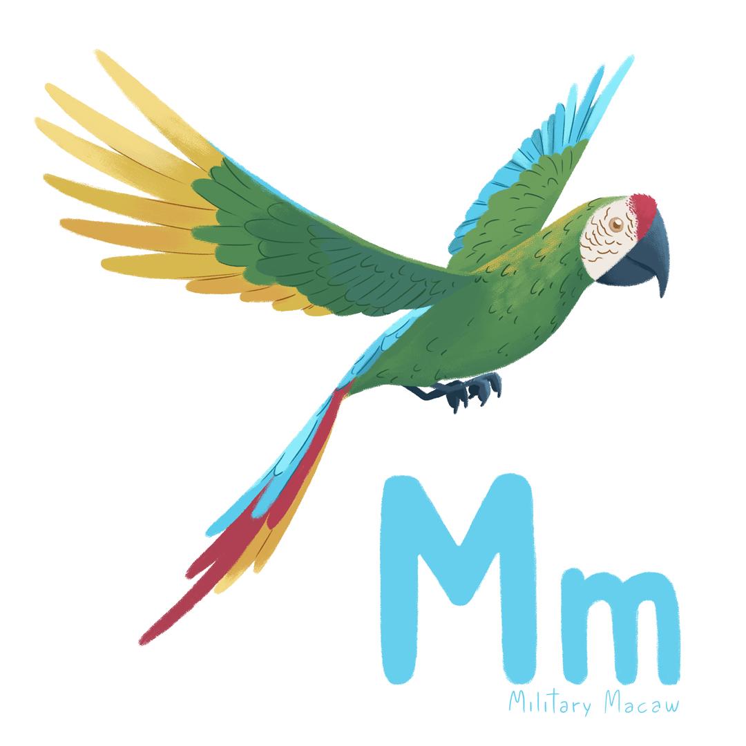 military_macaw.jpg
