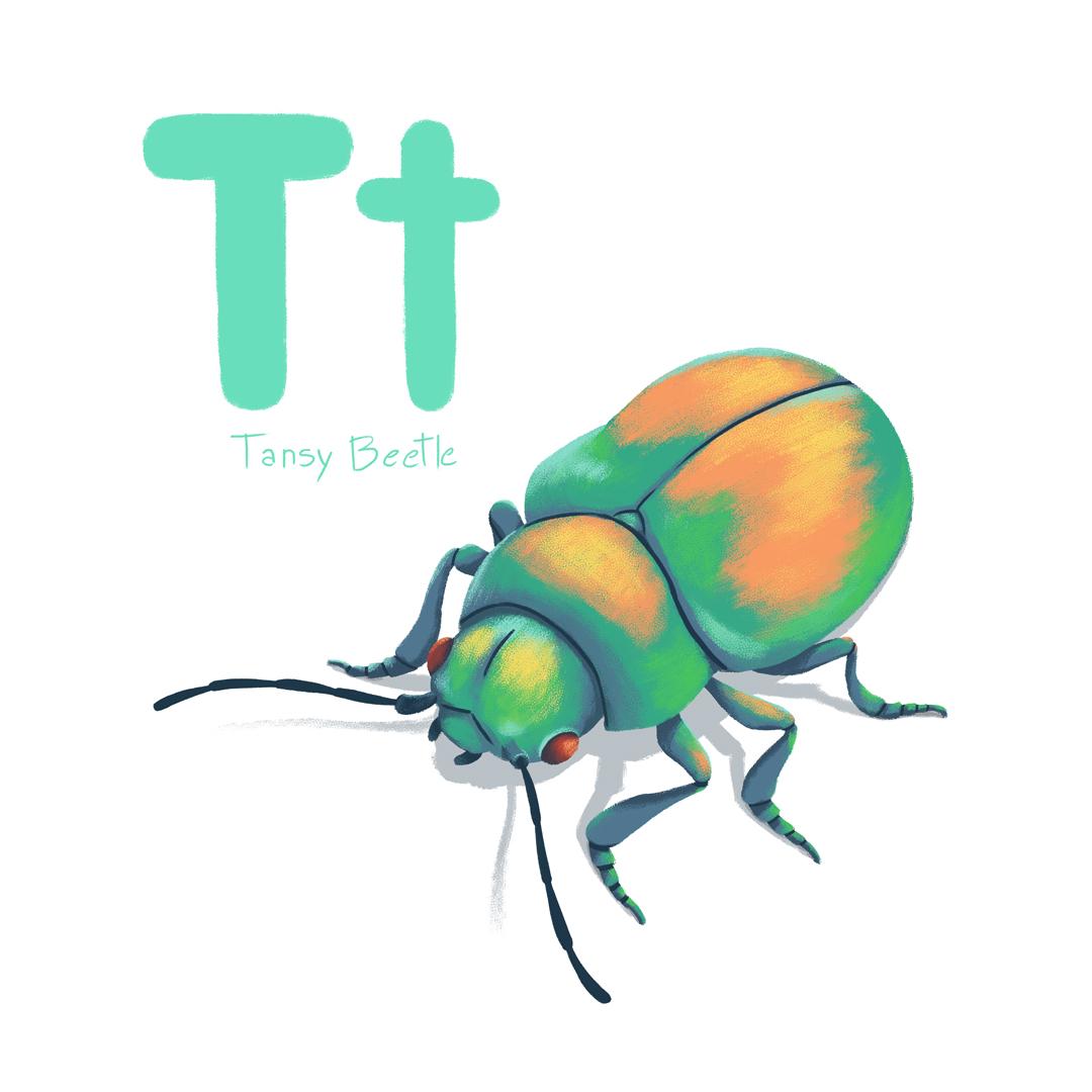 tansy_beetle.jpg