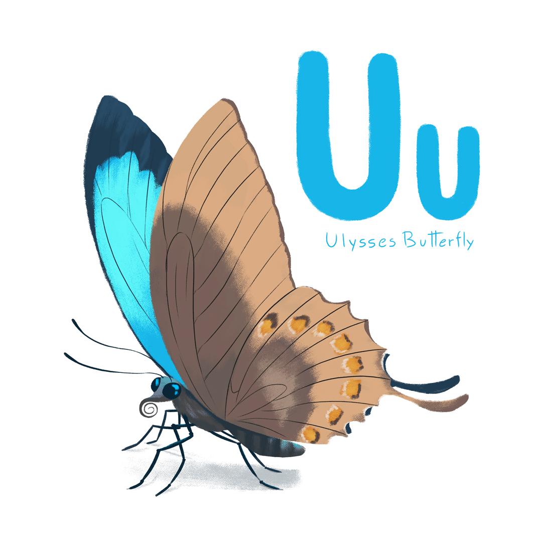 Ulysses-Butterfly.jpg