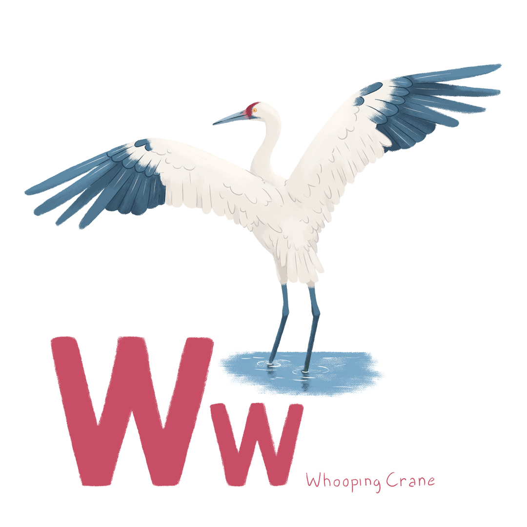whooping_crane.jpg