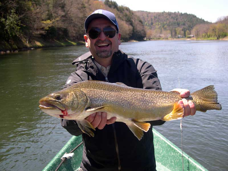 Hybrid Tiger Trout caught on the Delaware River with Sweetwater Guide Service