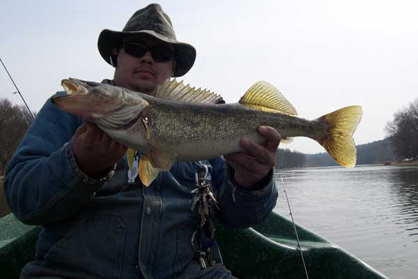 Big river Walleye's with Sweetwater Guide Service on the Delaware river