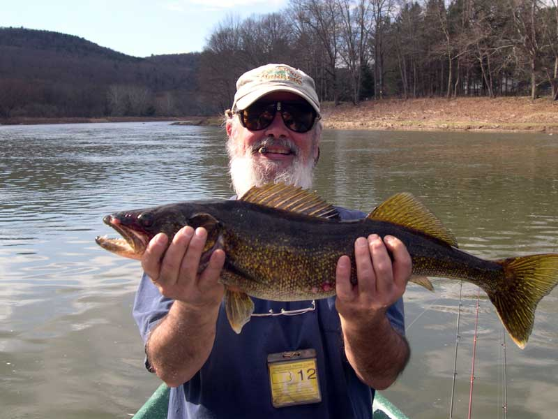 Upper Delaware River Walleye caught with Sweetwater Guide Service