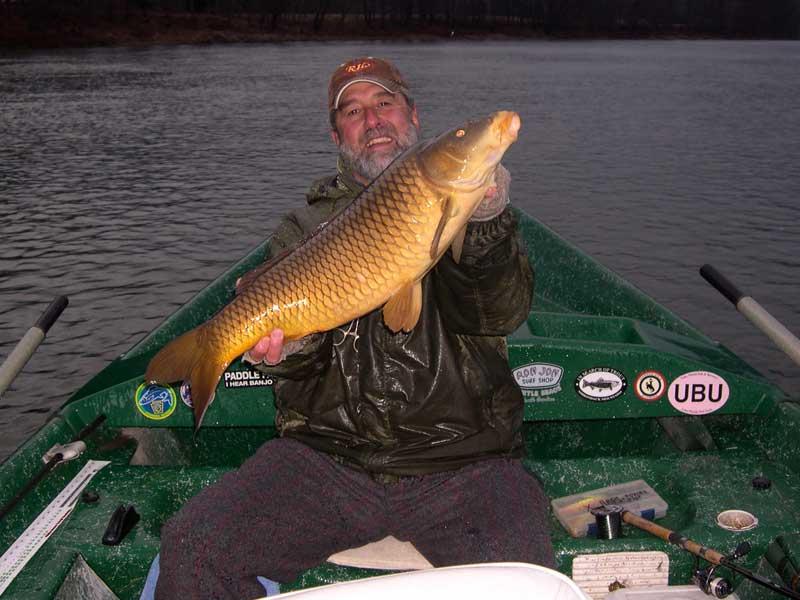 "30"" carp on the Delaware"