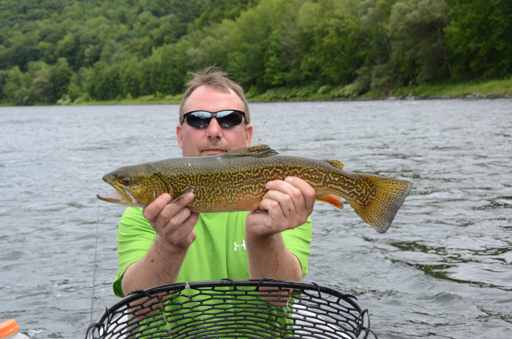 """8/16/15 Aaron L. Nails this 20"""" Tiger Trout on the Main Stem"""