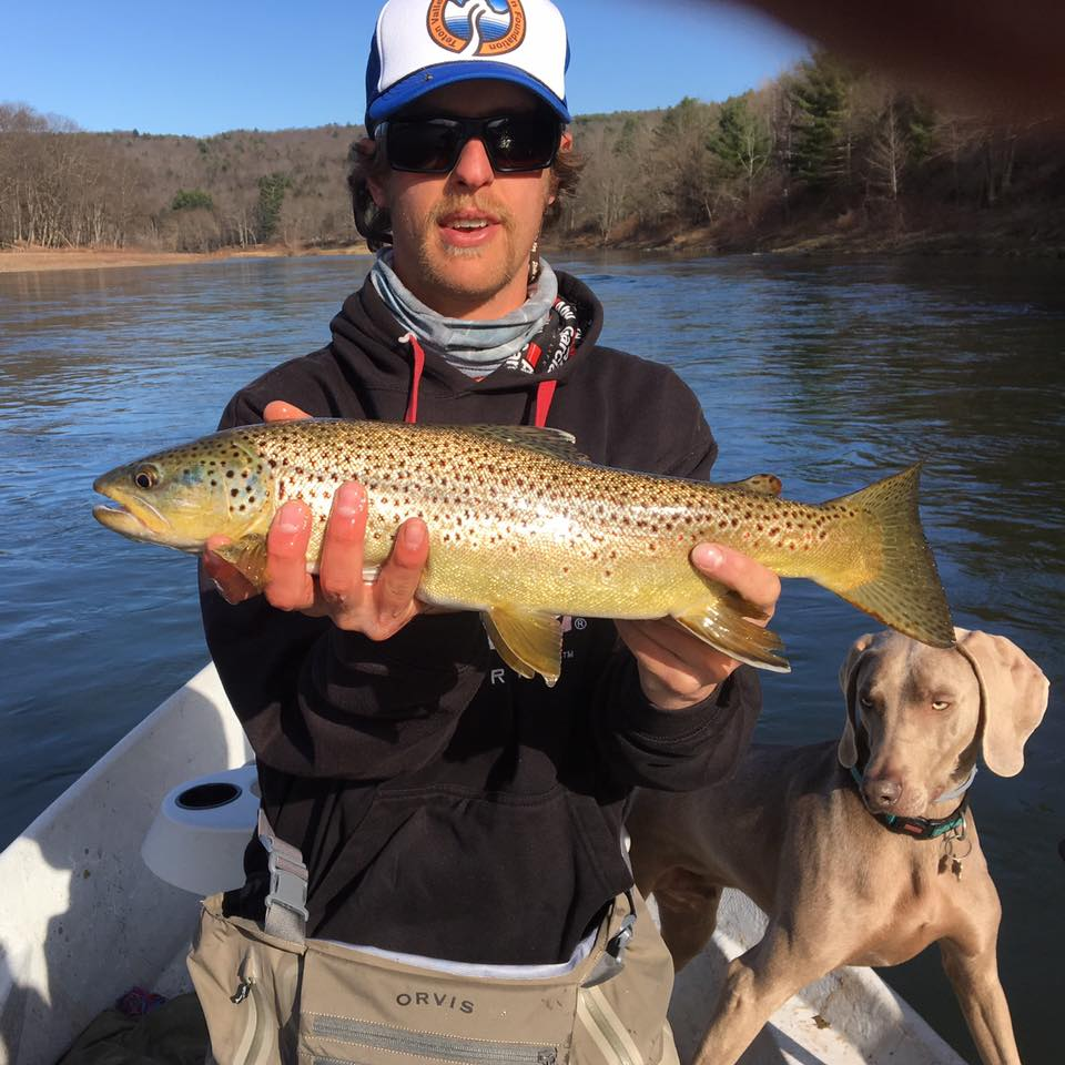 4/13/16 Large Hen Brown trout caught by Guide Evan. Gulliver gets the assist.