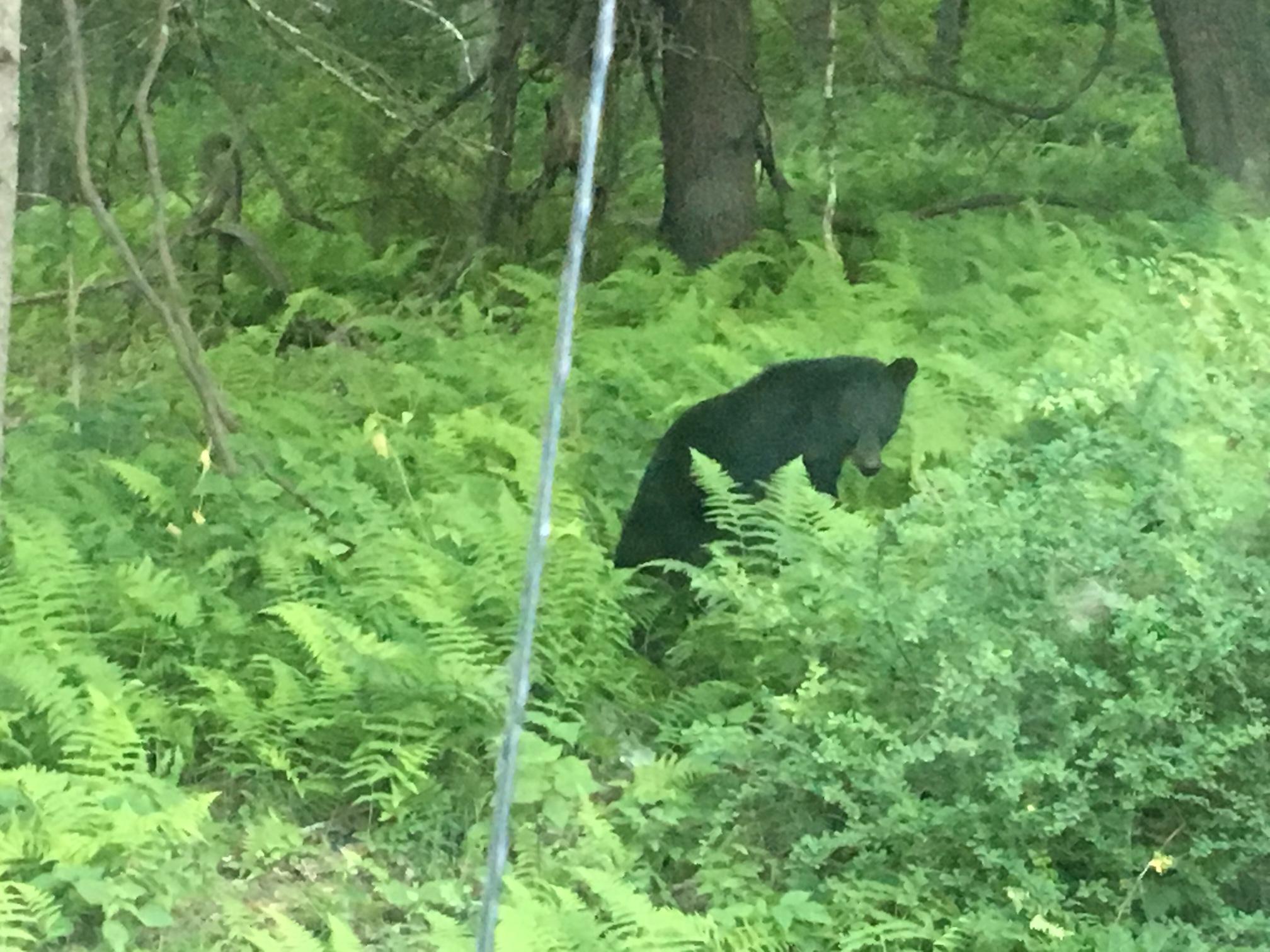 Bear mischief.