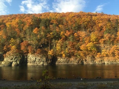 Foliage on the Upper Delaware