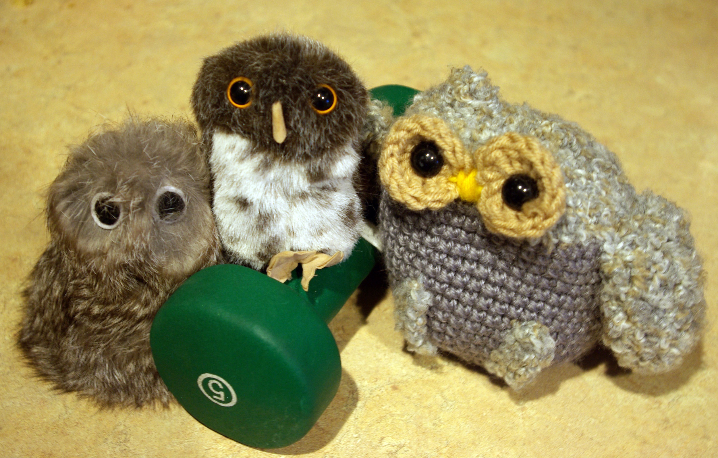 Some local night owls pumping iron.