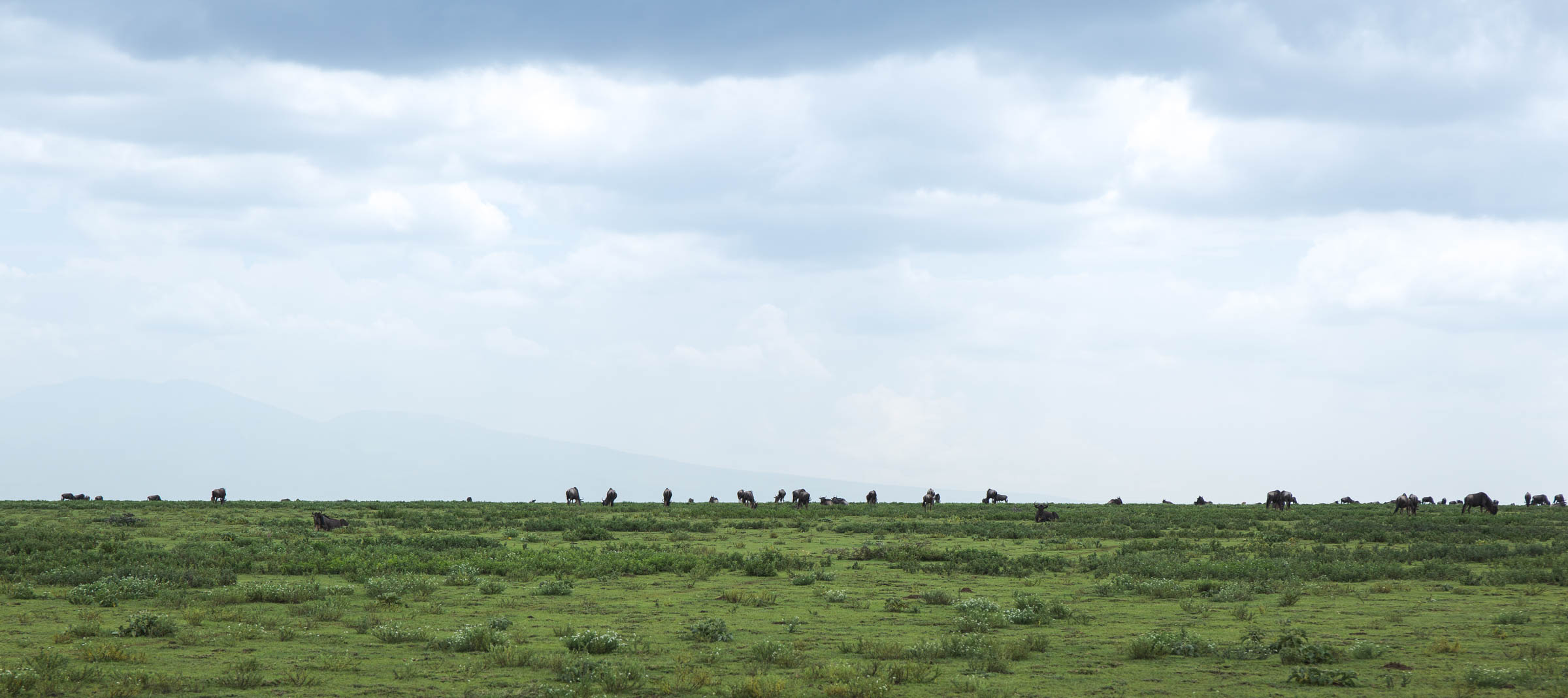wildabeastland.jpg