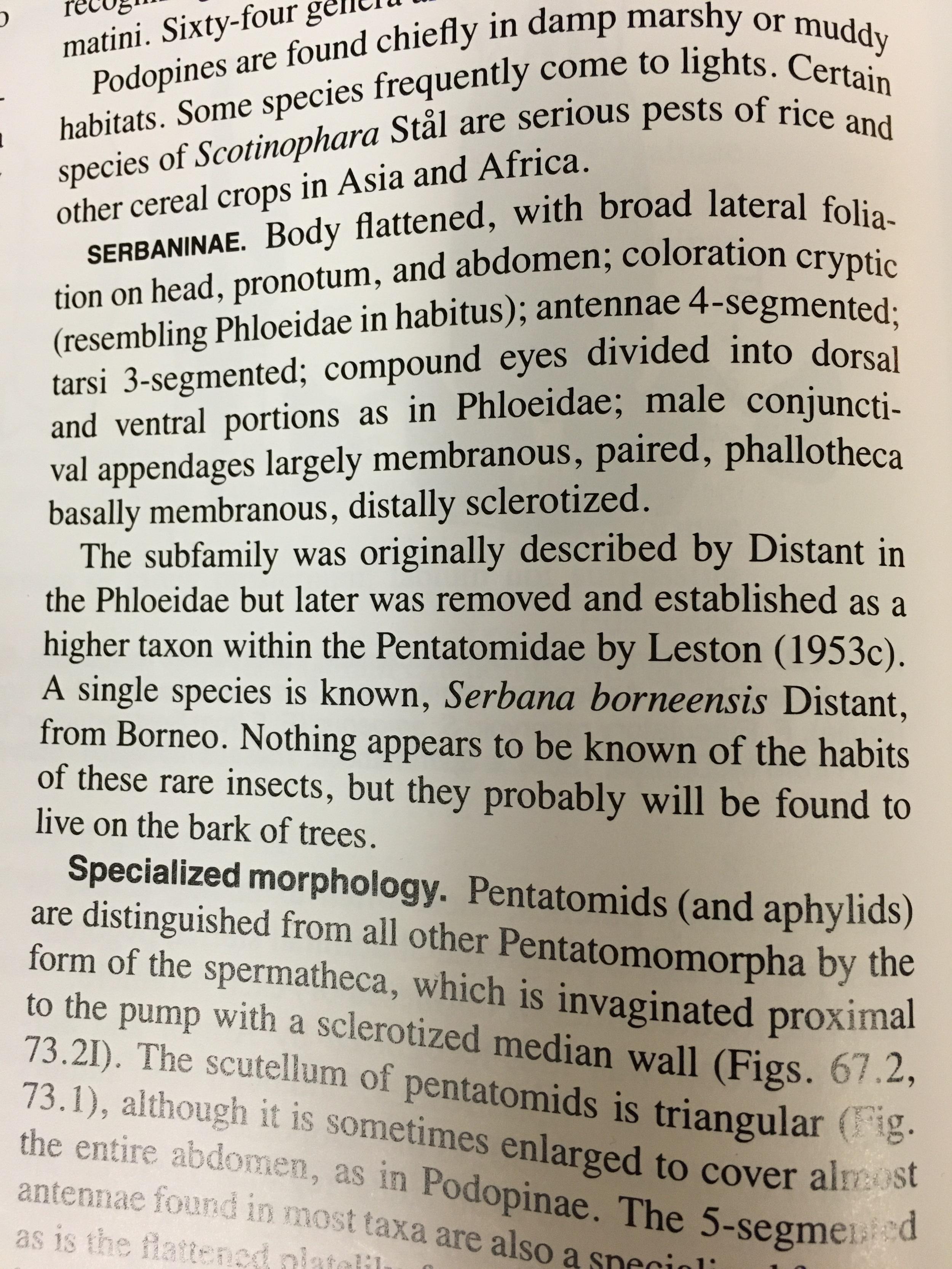 Excerpt from True Bugs of the World (Hemitpera:Heteroptera)