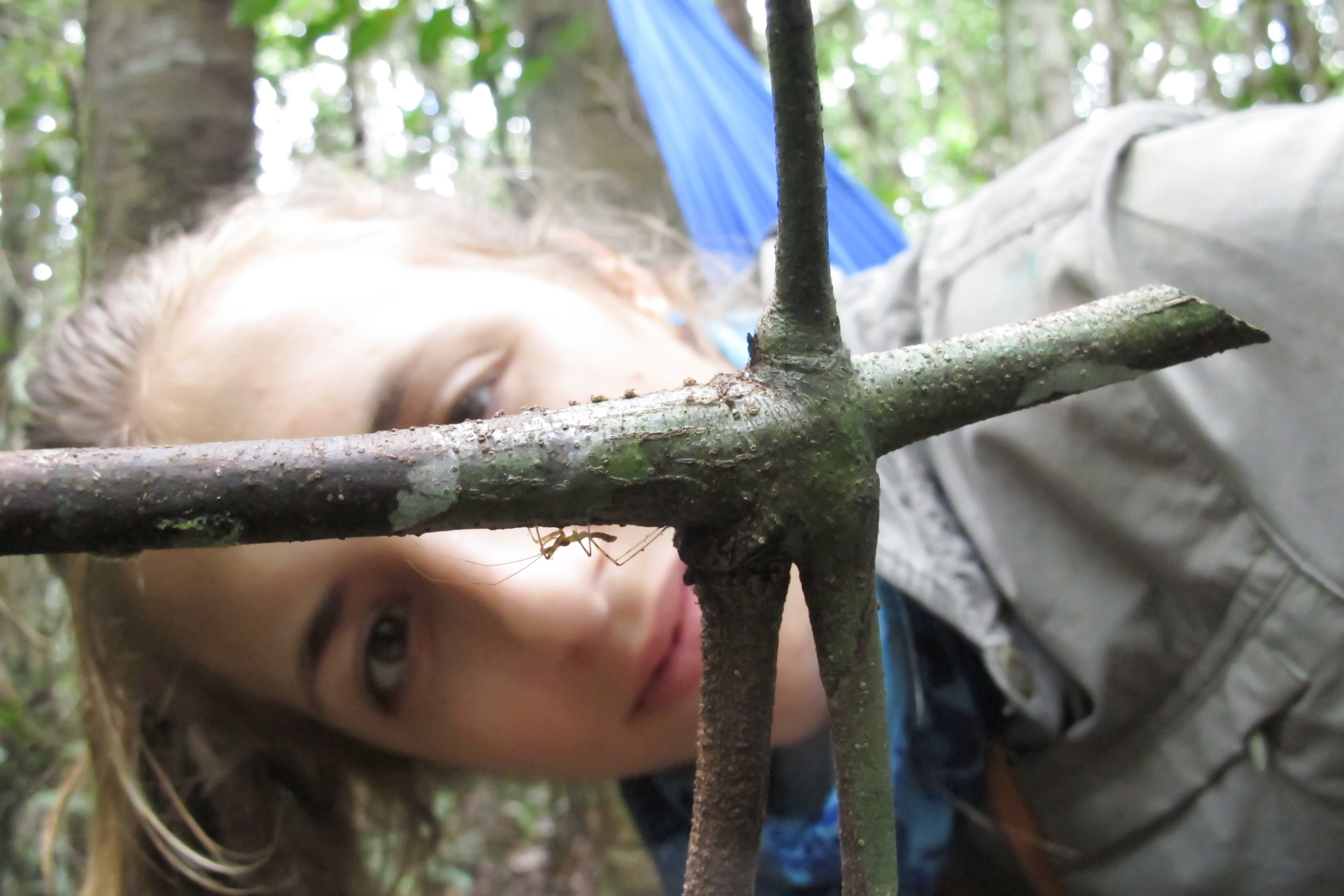 Examining a heteroptera bug in Borneo