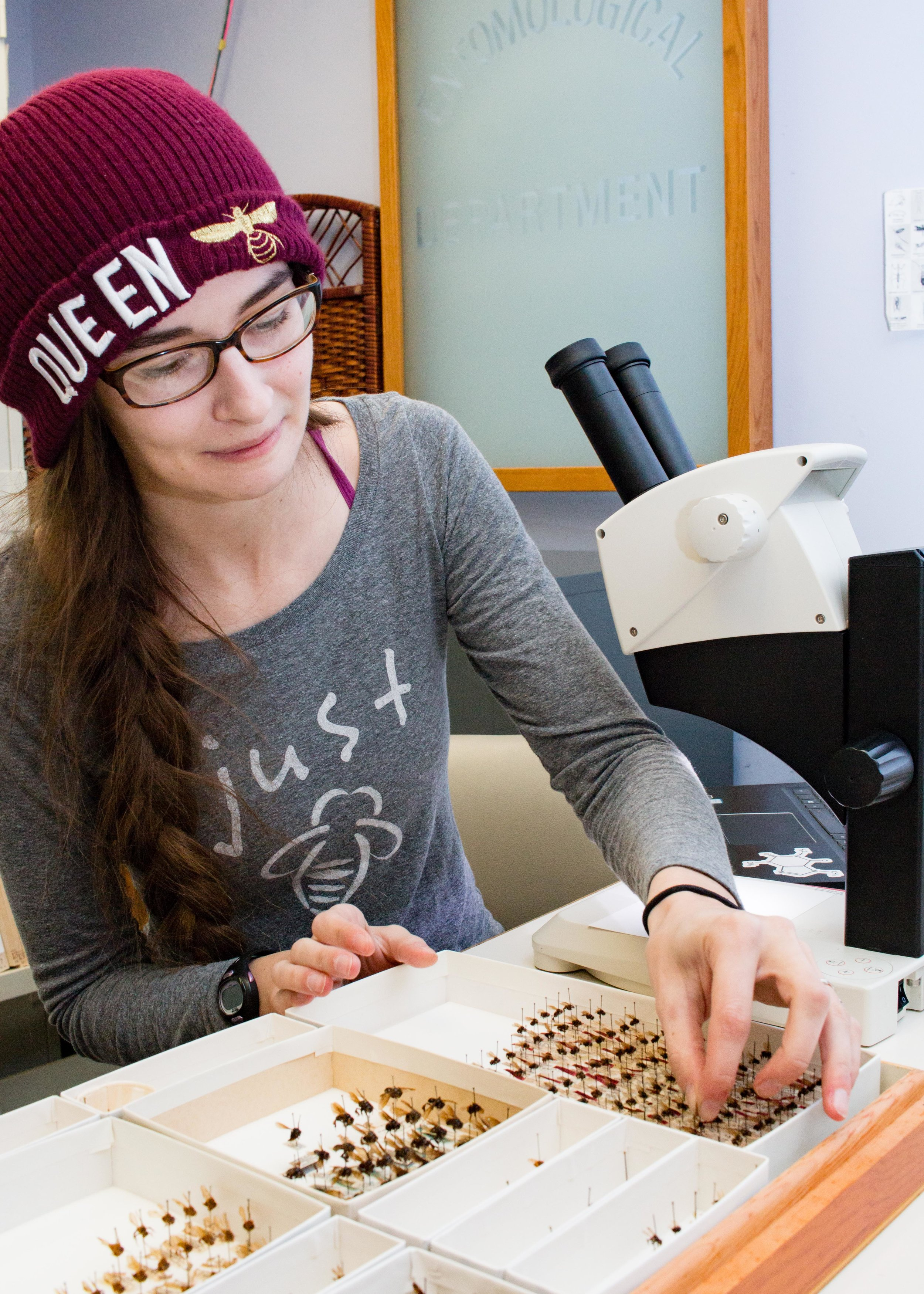 Drexel University graduate student, Meghan Barrett examines bee mandibles as part of a collective effort across bee researchers and collections to see if bees might be left or right jawed.