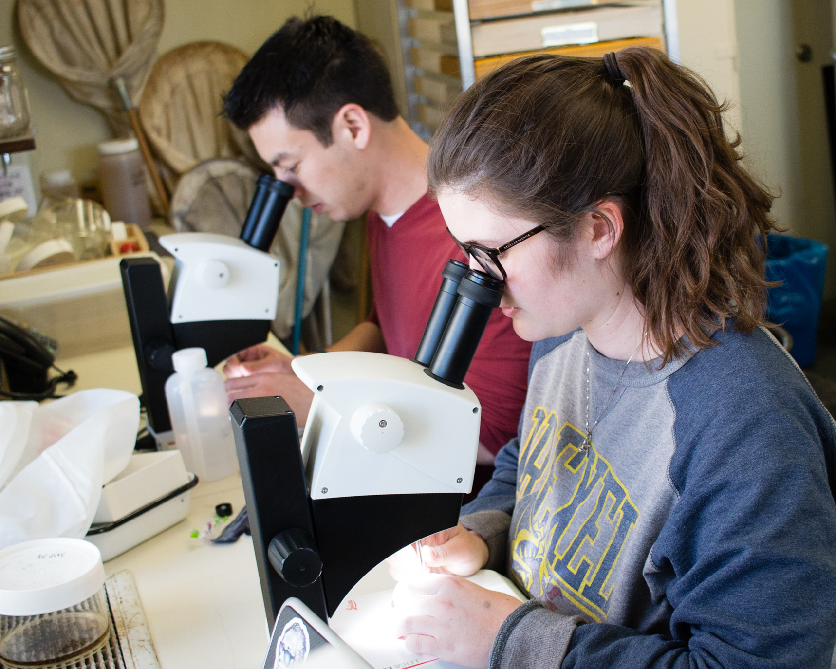 A graduate student and an undergrad intern use magnification to identify and sort insect samples.