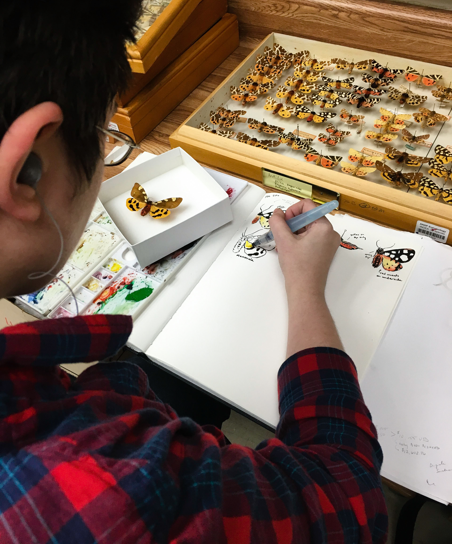 Not only do scientists use the collection. Artists draw inspiration from the endless forms. Artist, Mary Capaldi, draws specimens from the collection in her notebook.