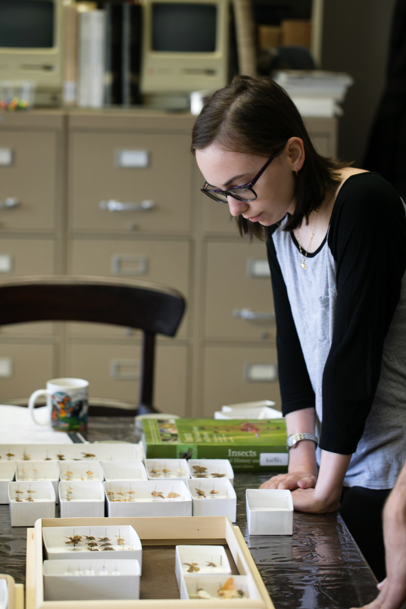 A student intern sorts moth specimens