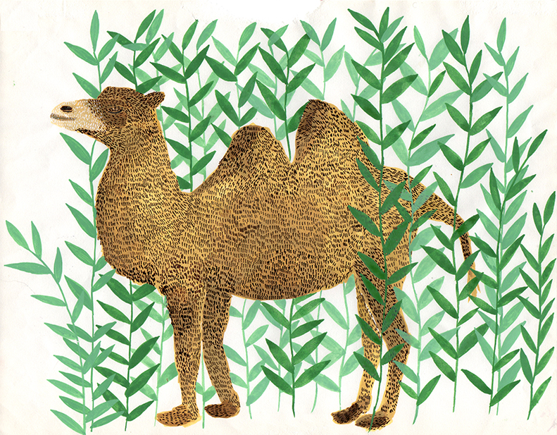 camel-for-e-magazine-.jpg