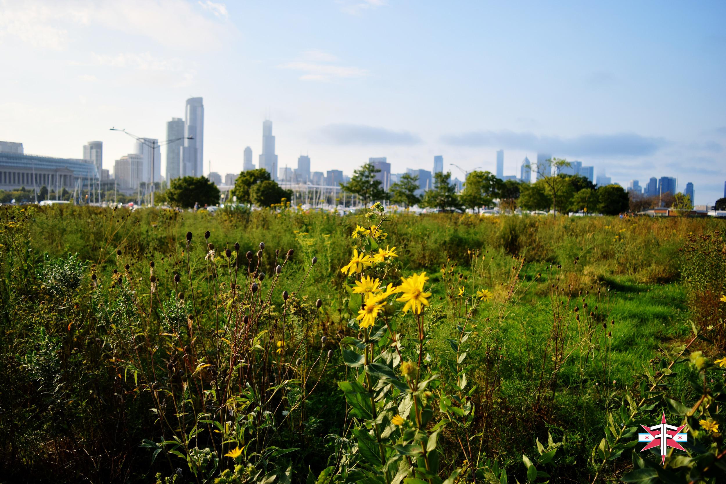 chicago art architecture eric formato photography design arquitectura architettura buildings skyscraper skyscrapers-330.jpg