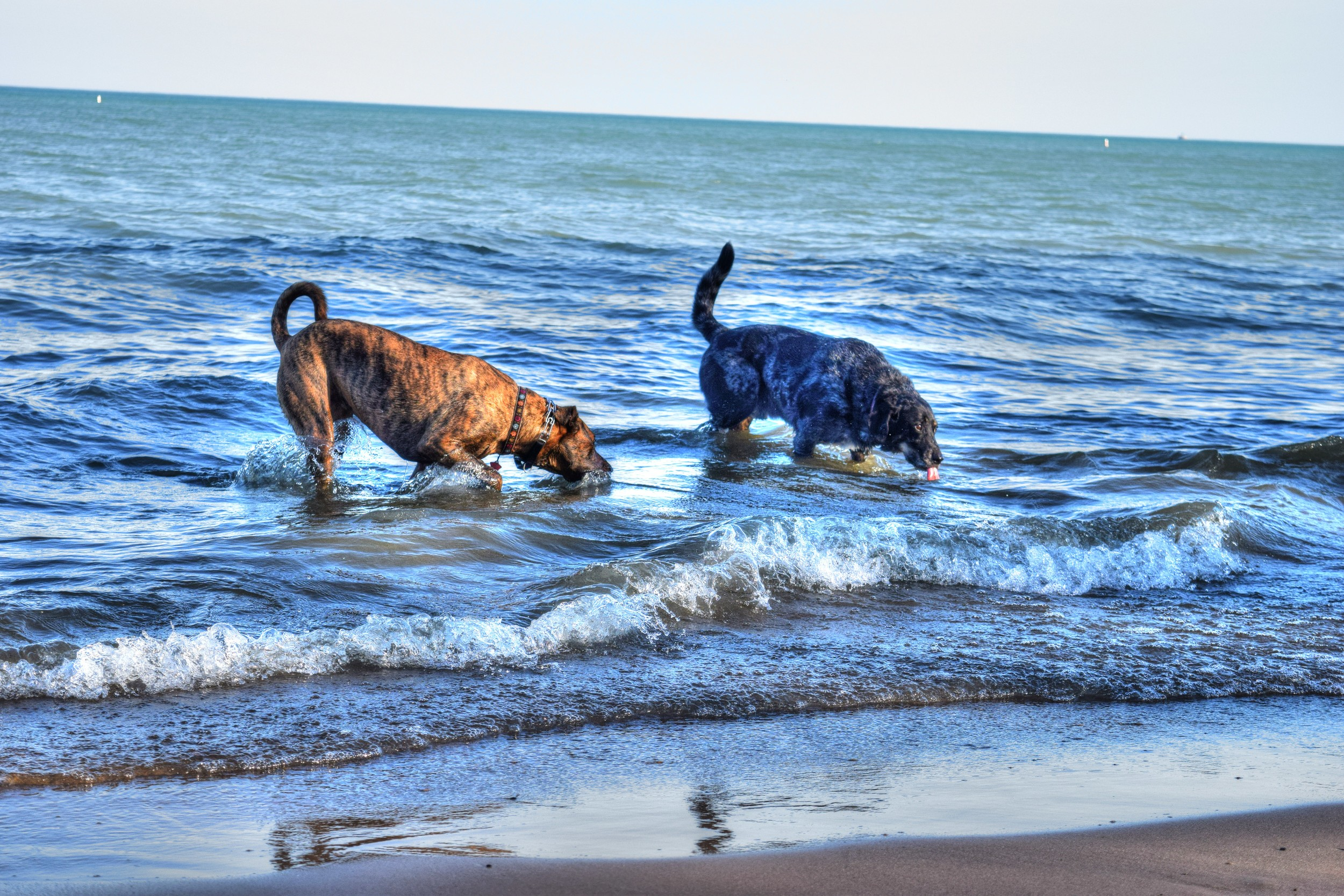 diego-dogs-rodgers-park.jpg