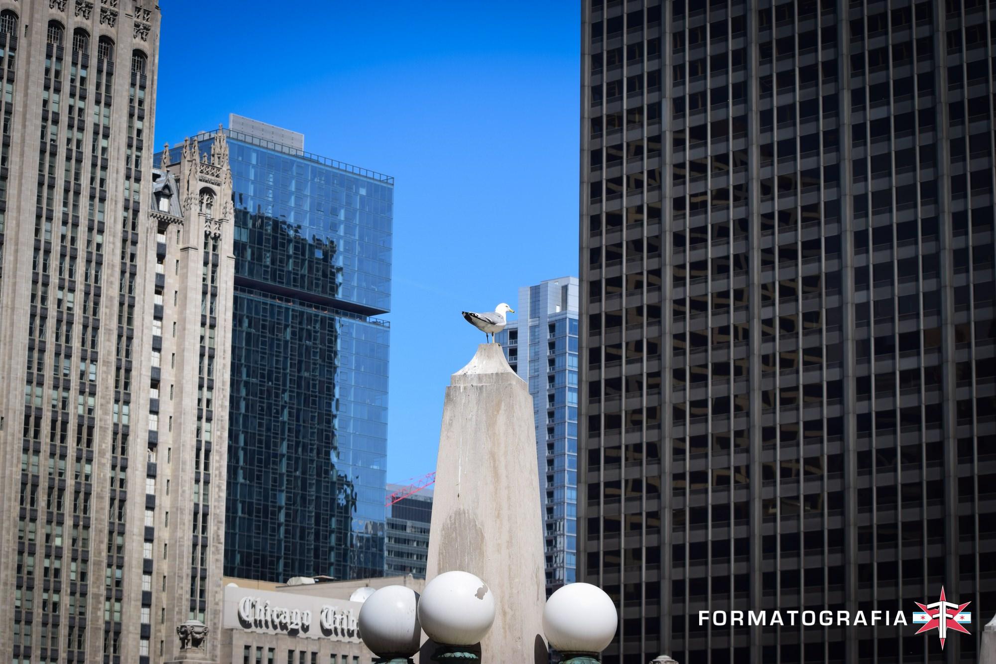 eric formato chicago photographer fall update city architecture shotsDSC_0617.jpg
