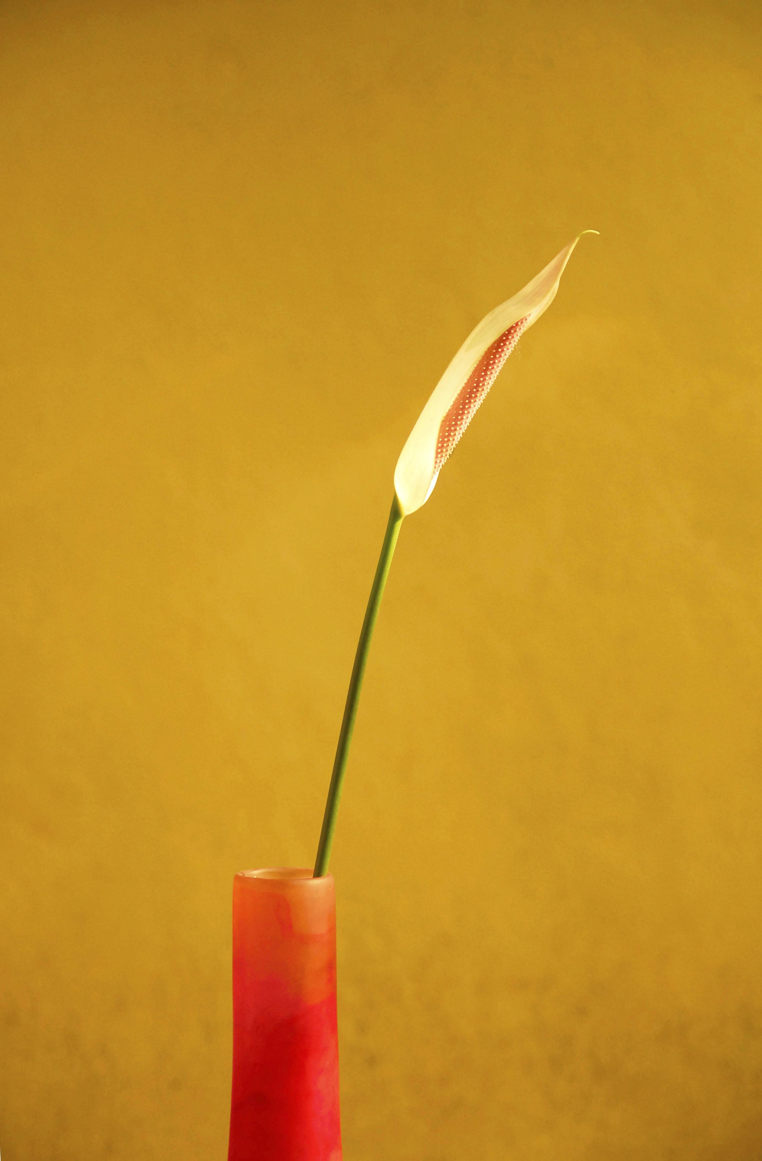 Red Vase5.jpg