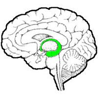 level05hippocampus.jpg