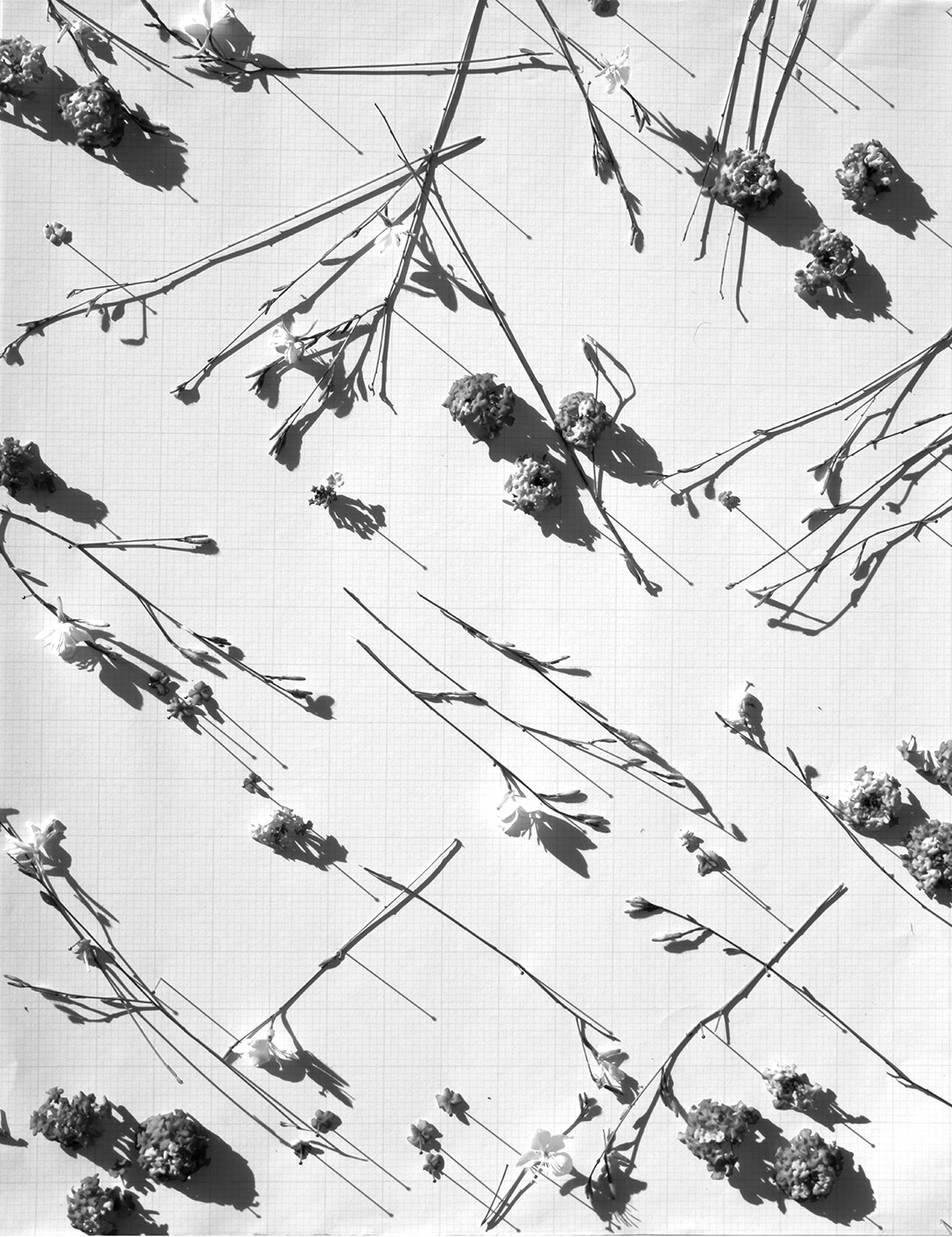 Drought Tolerant #1, Archival Pigment Print