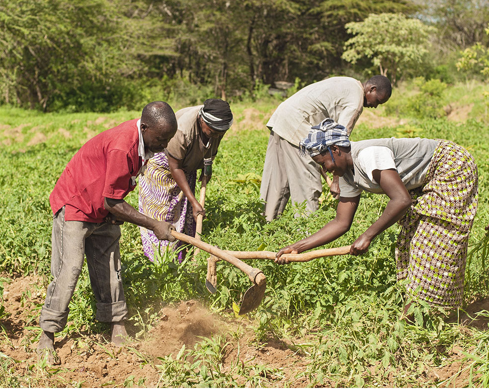 A horticulture project in Kenya