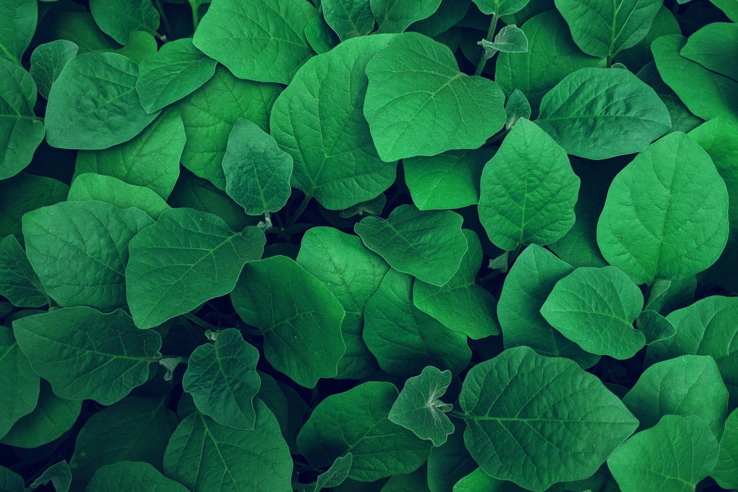 Start Green application -