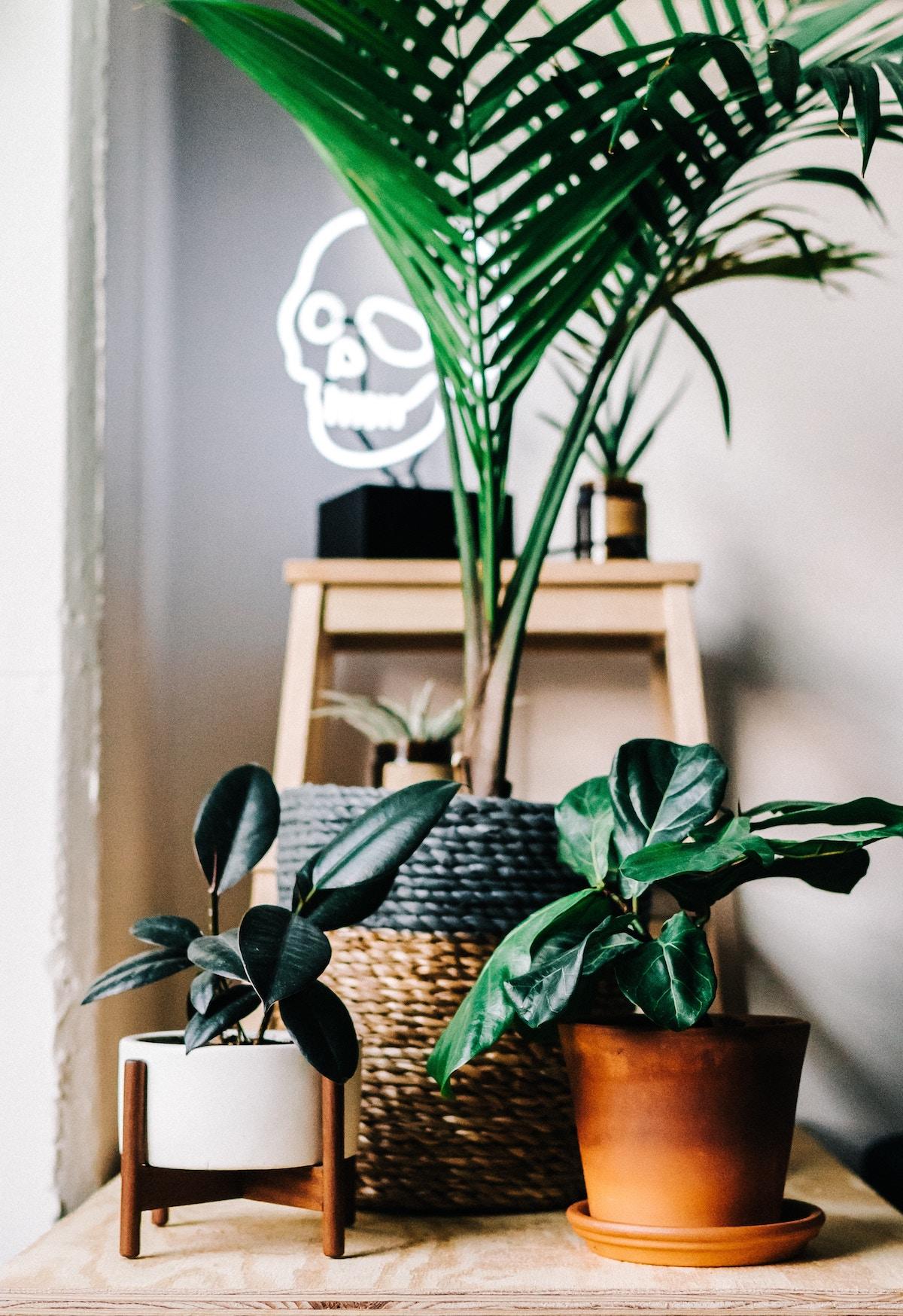 Multiple house plants