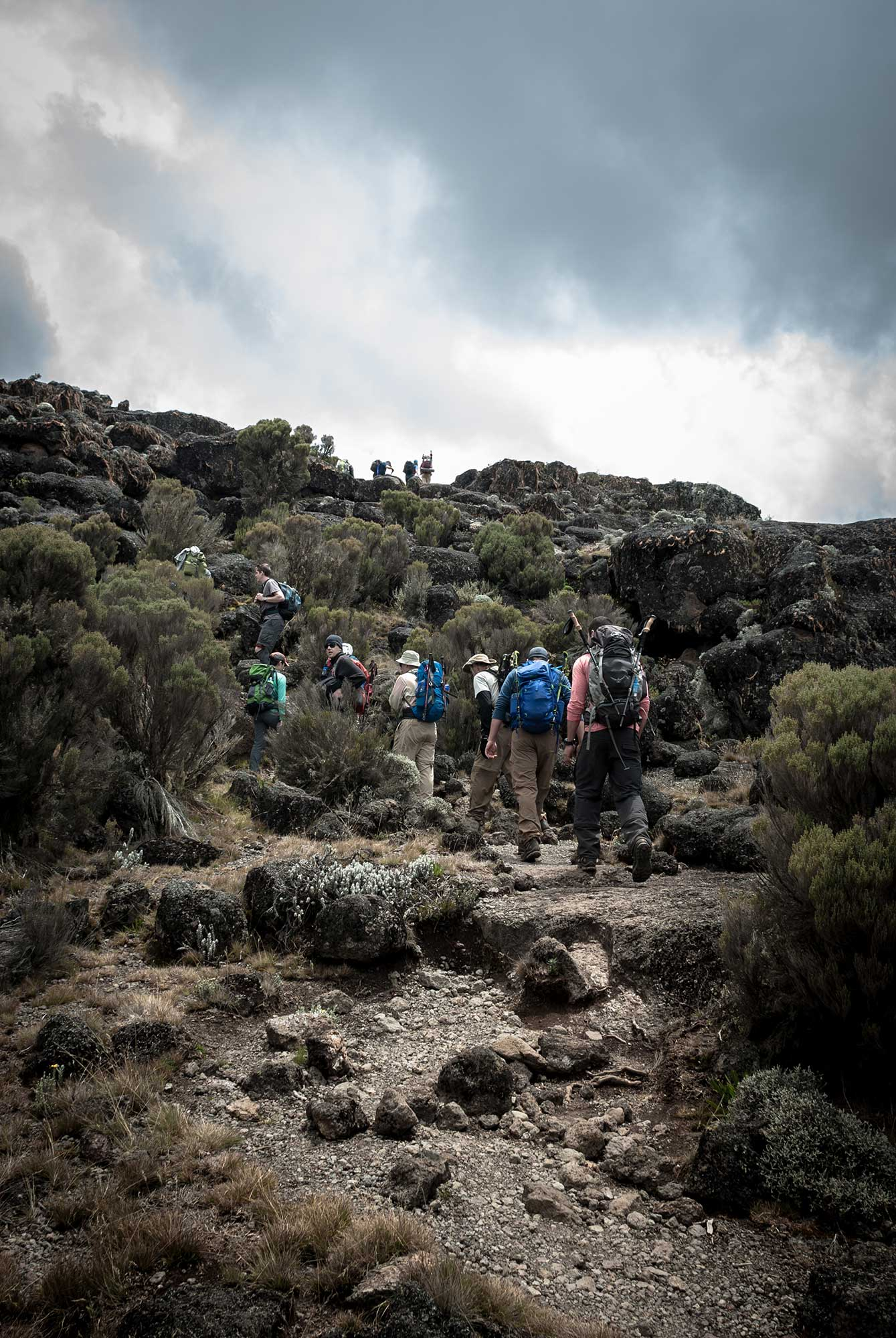 D3-23-Kilimanjaro-climbers-heading-to-Moir-Hut-Camp-01.jpg